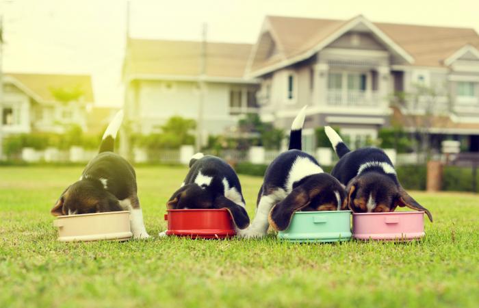 Rezisztens baktériumok a nyers kutyaeledelekben