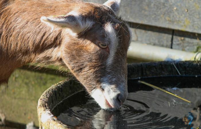Tiszta vízzel csökkenthetjük az antibiotikum-felhasználást