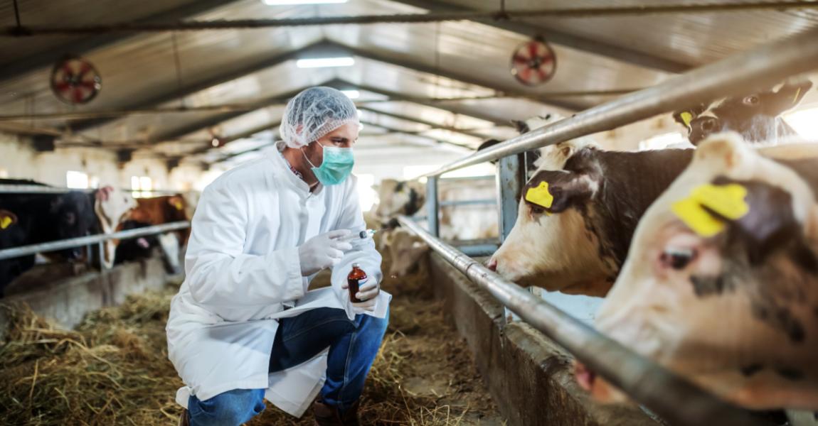 Jelentés az antibiotikum-felhasználásról
