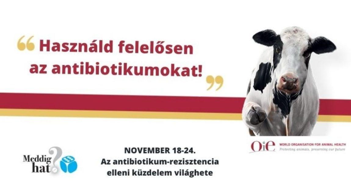 """Az öt """"csak""""-szabály az antibiotikum-rezisztencia elleni küzdelemben"""